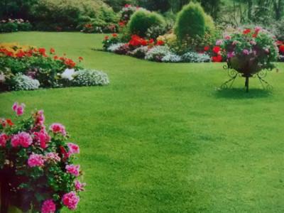 Semillas de pasto 20g a la semiller a for Tipos de cesped natural para jardin